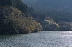 そうだ箱根に行こう^^