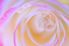 vortex of petals
