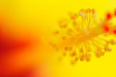 花中の世界
