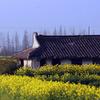 農村の春④