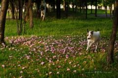 木陰の落ち花