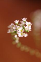 初めての花♪
