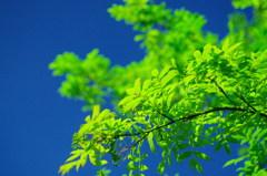 街灯が照らす木の葉