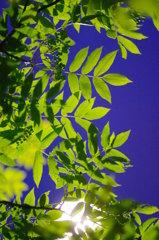 街灯に浮かぶ木の葉