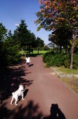 秋晴れの散歩道
