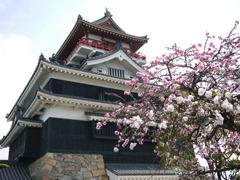 清洲城とさくら