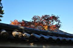 屋根越しの朱