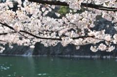 葬春花 ~さくら~ #13