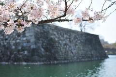 葬春花 ~さくら~ #12