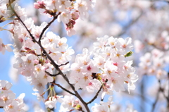 葬春花 ~さくら~ #6