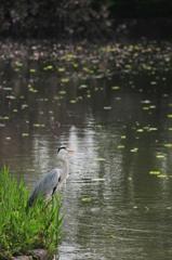 水辺に鷺 #2