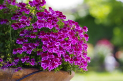 vsattui flower2
