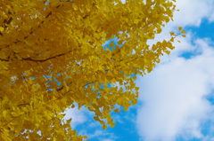 yellow leaves & sky