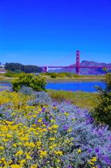 Golden Gate Bridge and Flower