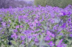 NAGAI Botanical Garden