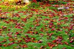 red leaves & green moss