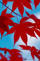red leaves & sky