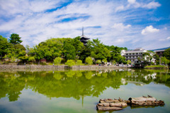 sarusawa-no-ike