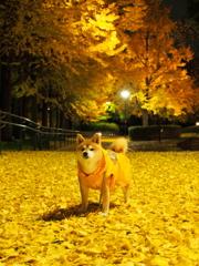 秋色のリーダー 2014' Part2