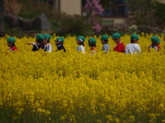 黄色のお散歩コース