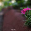 路傍の花.2