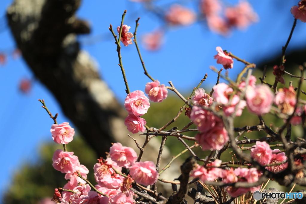 IMG_0195 冬から春へ