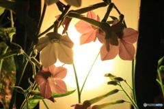 IMG_2135 花柄