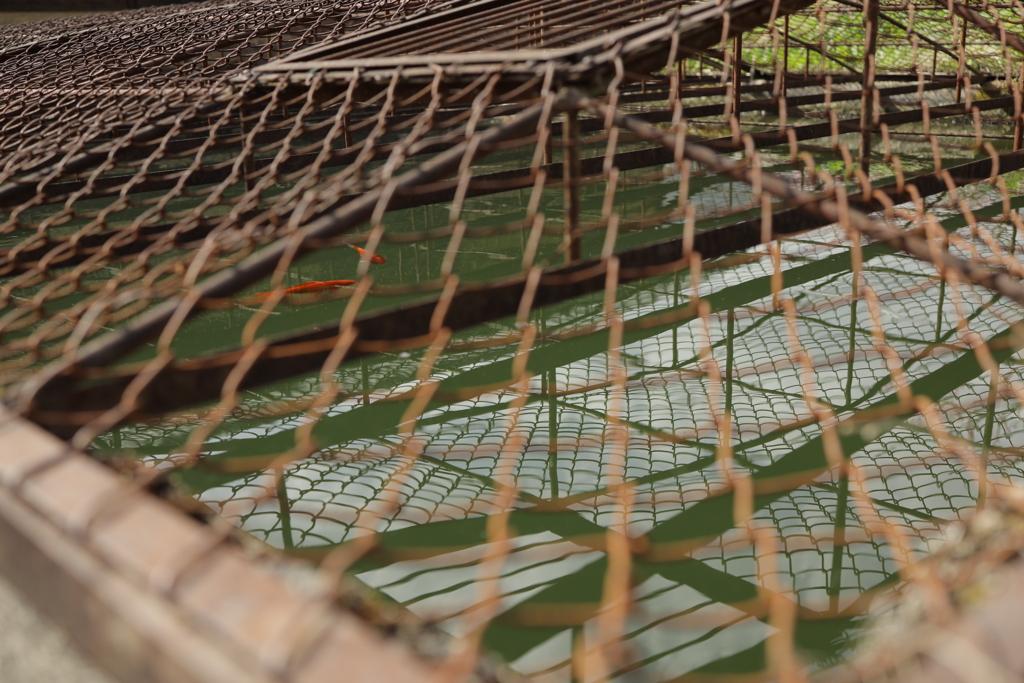 網目と金魚