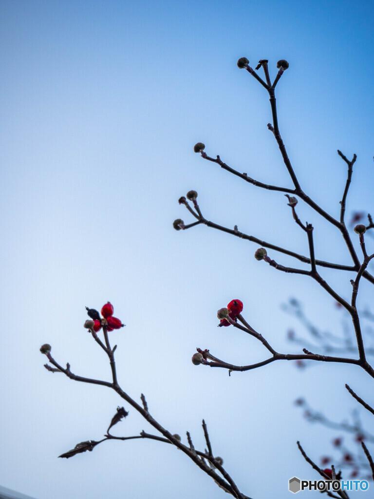 小さな赤い木の実