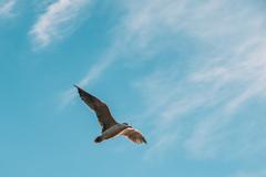空を翔ける