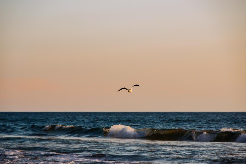 海へ飛び去る