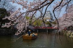 姫路城お堀の桜