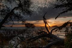 琵琶湖 水中木 #2