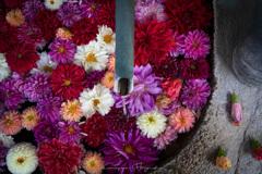 岡寺の花手水