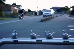 安全運転しま鳥