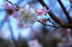 季節の忘れ花