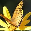 秋分の日 蝶(1)