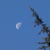 12月の朝の月(3)