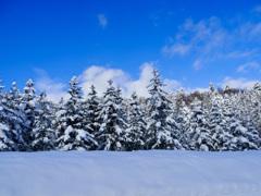 新春雪景色