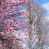 (春が来た!)