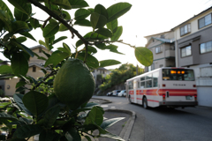 檸檬とバス