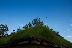 芝生の屋根
