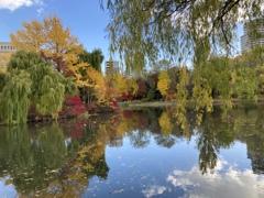 秋の午後 紅葉日和