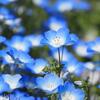 春呼ぶ彩り