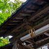 百済寺 3
