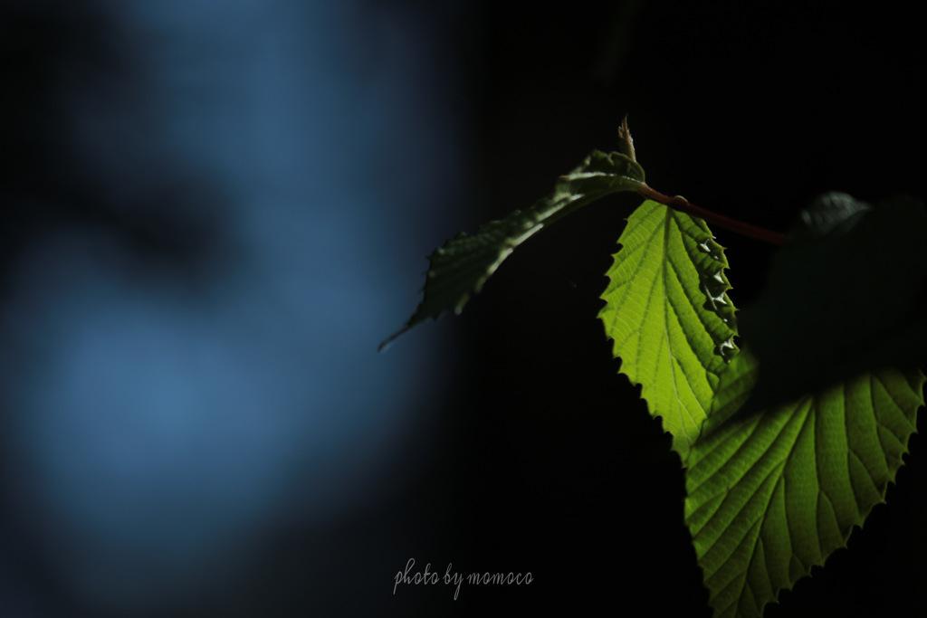 照らされる新緑