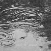 雨の日の波紋