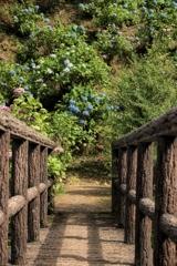 紫陽花への道