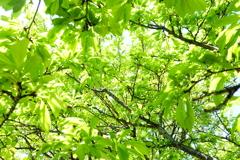 (雑葉が輝く)新緑が来てました