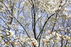 春を告げるが冬期な漂い